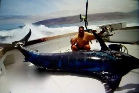 Blue Marlin off Cape Verde
